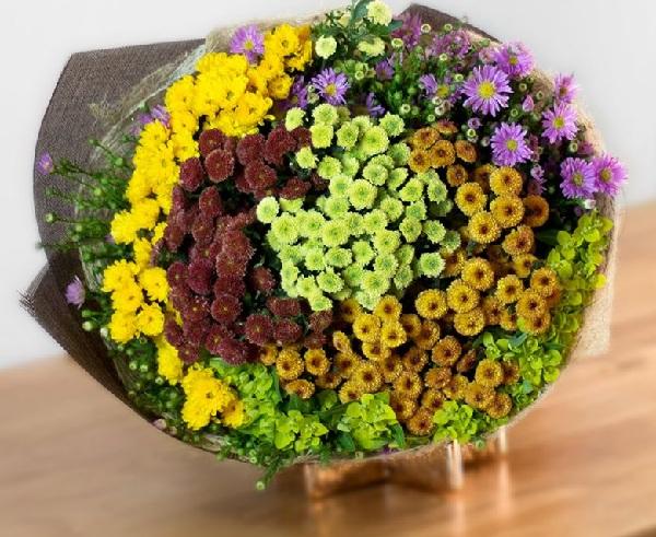 Các Loại Hoa Cúc Nhỏ Nhiều Màu Đẹp Nhất