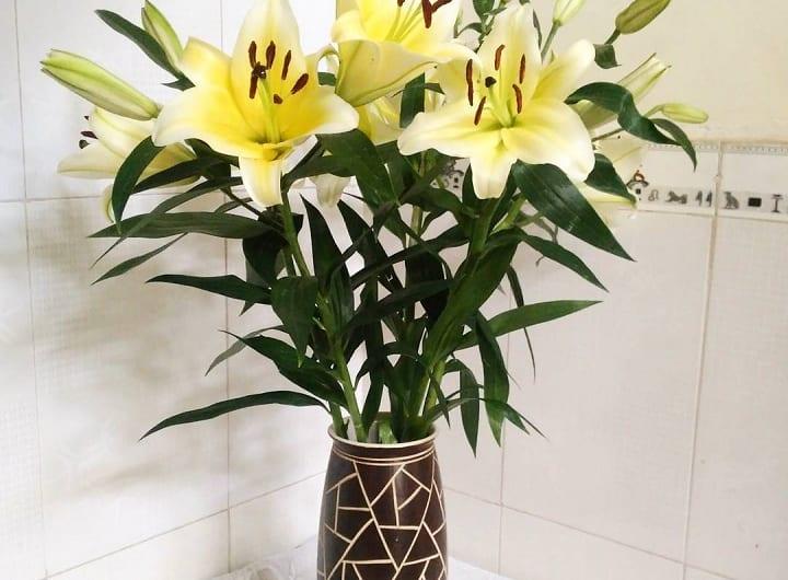 Ý nghĩa hoa ly ngày Tết