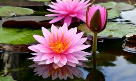 Các loài hoa tượng trưng cho hòa bình