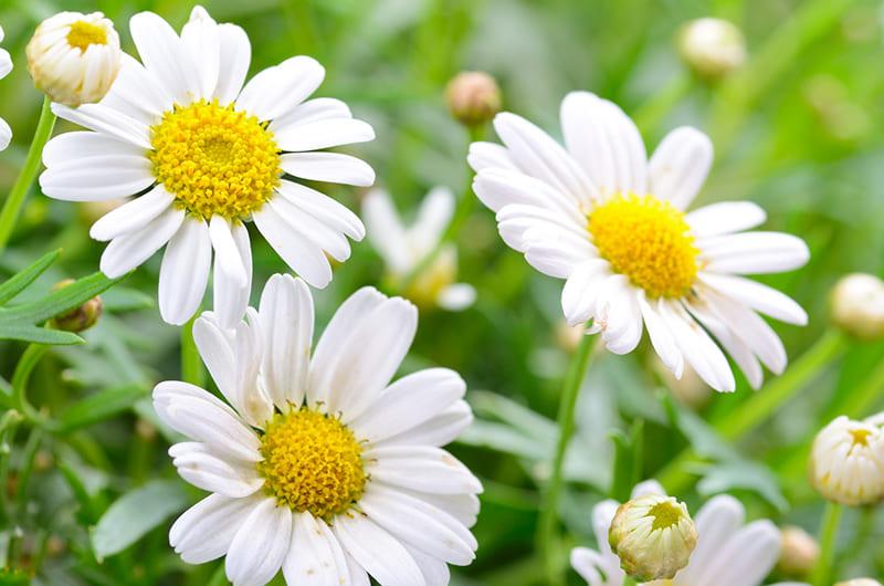 Những loài hoa tượng trưng cho tình bạn