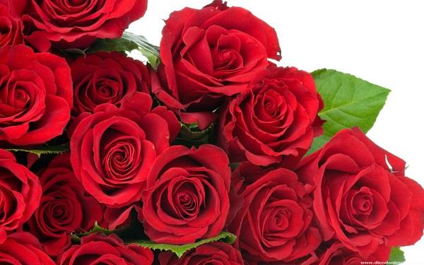 Tặng hoa Valentine có ý nghĩa gì?
