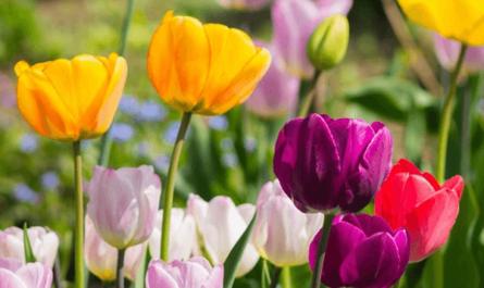 Tên loài hoa tượng trưng cho sự quyến rũ