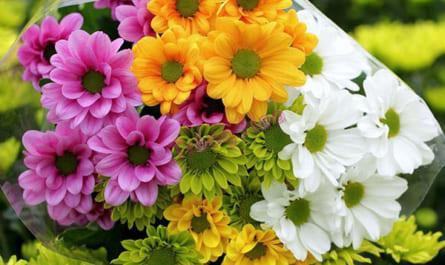 Cách giữ hoa cúc tươi lâu