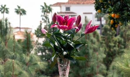 cách giữ hoa ly tươi lâu ngày tết
